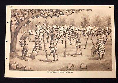 Vintage 1930s Poster Chart Print DRYING COPRA IN THE SOUTH SEA ISLANDS  - No. 82