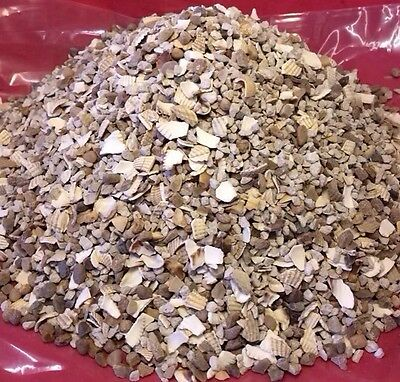 Chicken Grit 1 Kg Oyster Shell Poultry Grit Calicum Support Hens Egg Laying
