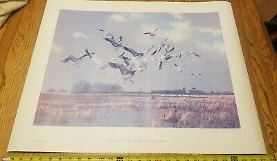 Owen Gromme Print 1972. Snow and Blue Geese Returning to Rosendale Signed Number