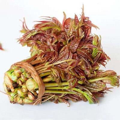 Chinese red toon 100 seeds Garden Vegetable Colorful retail package 原装彩包蔬菜种子香椿
