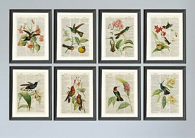Antique Book page Art Print - Set of 8 Hummingbirds Antique Dictionary Art