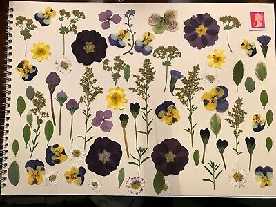 70 Real Pressed Flowers, petals and Leaves for Card Making, Scrapbooks + Crafts
