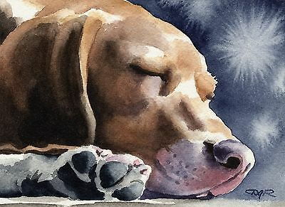 BEAGLE ART Print WATERCOLOR Dog 8 x 10 Signed by Artist DJ Rogers
