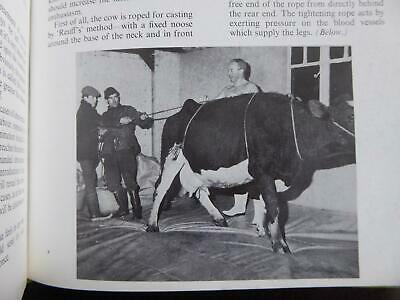 How To Draw Calves A Lovely Older Book With 300 Illustrations Calving Birth Etc