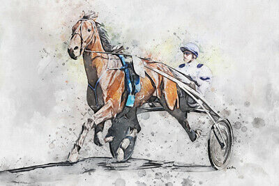Course chevaux trot