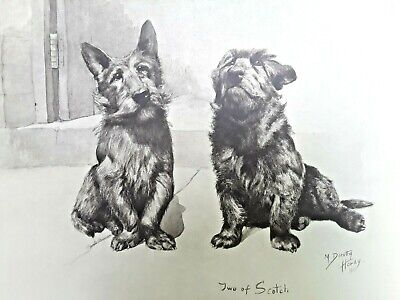 Antique English School Photogravure of Scotty Dogs Watercolor / M Dorothy Hardy