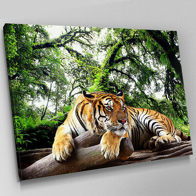 A394 Bengal Tiger Rain Forest Resting Canvas Wall Art Animal Picture Large Print