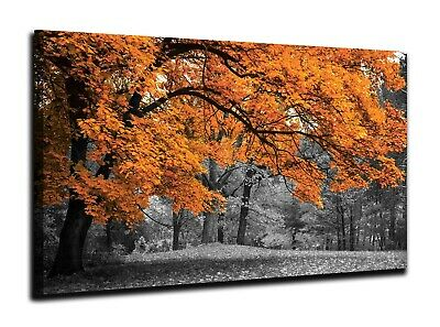 Burnt Orange Tree Black And White Canvas Print Wall Art Picture 18 X 32 Inch