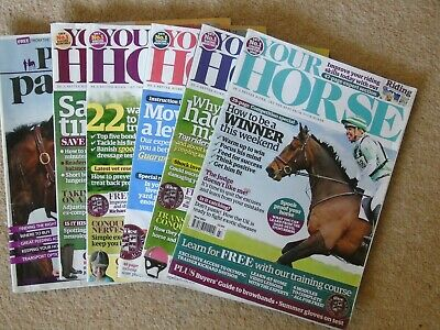 Your Horse Equestrian Mag 5 Copies 2011 May July Aug Sept Dec+ Perfect Partners