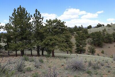 NO RESERVE - .17 Acre Lot Pike San Isabel Village in Hartsel, CO