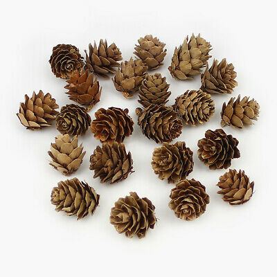 20Pieces Natural Dried flowers Pine cone Acorn Artificial Flower Home Room Decor