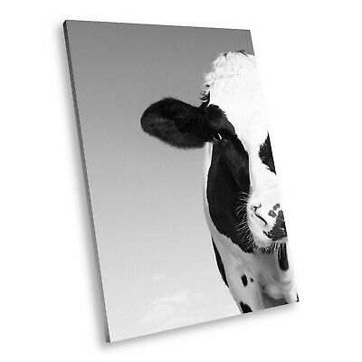A721 Cow Nature Black White Animal Portrait Canvas Picture Print Small Wall Art
