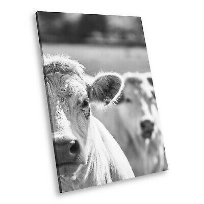 A773 Cow Nature Black White Animal Portrait Canvas Picture Print Small Wall Art