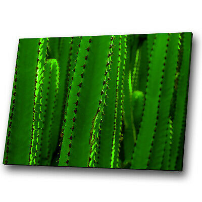 Green Cactus Funky Cool Abstract Canvas Wall Art Large Picture Prints