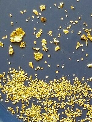 Panning Paydirt 100% Unsearched and Guaranteed 30 + Gold Nuggets Added. 1-1/2Lb