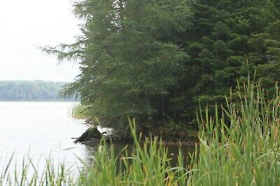 9 Acres of Lakefront Property in Northern Maine. Bid on Downpayment.
