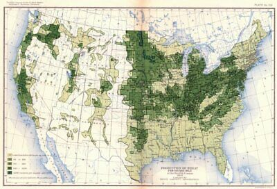USA. Production of wheat / sq mile at 12th census  1900 old antique map chart