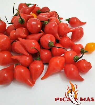 30 Gota Roja Inca Semillas Seeds Sweety Drops Pimiento Lagrima Peppers