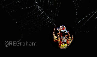 Digital Picture Image Photo Wallpaper JPG file Desktop Screensaver Print Spider
