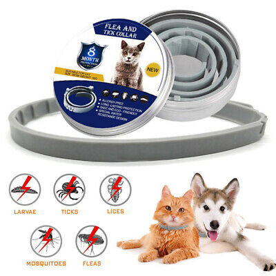 HOT Flea and Tick Collar Anti Insect For Pet Dog Cat 8 Month Safe Pests Control