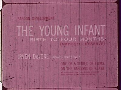 The Young Infant: Birth To Four Months 1969 16mm short film about Baboons
