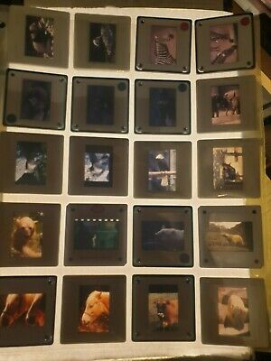 20 Amateur Vintage 35mm slides Zoo Animals & Birds
