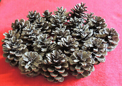 """25 Pine Cones Christmas Holiday Wreath Decoration Natural Fir Pinecones 2"""" Maine"""