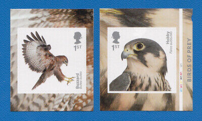 GB 2019 Birds of Prey.  Pair of S/A stamps from booklet.  CYLINDER W1.  MNH