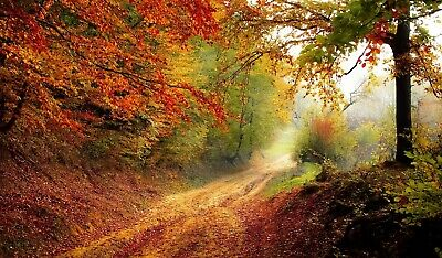 Digital Picture Image Photo Wallpaper JPG Desktop Screensaver Autumn  Landscape