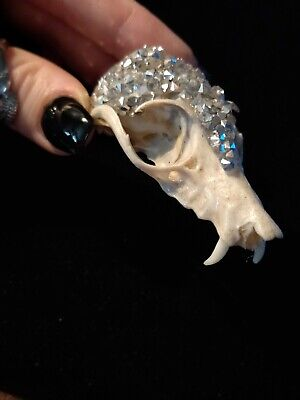 Real Bat Skull Taxidermy Body Jewelry Gothic Voodoo Metal Beads Witchcraft Spell