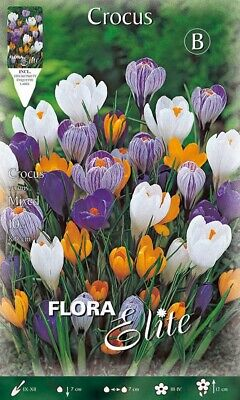 BULBI AUTUNNALI CROCUS LARGEFLOWERING MIX CONFEZIONE 50 BULBI BULBS BULBES