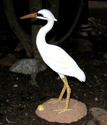 Great White Heron Shore Bird
