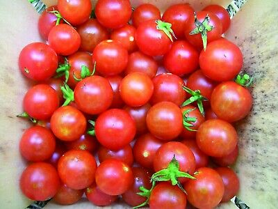 Vegetable Tomato Cherry - Sweet Million F1 - 15 Certified Seeds #11368