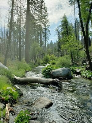 The Golden Rod, Gold Mining Claim, Tuolumne County, CA Yosemite and Gold await!