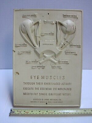 Vintage Bausch & Lomb Optical Co Eye Muscles Cutaway Office Plaque by Syroco old