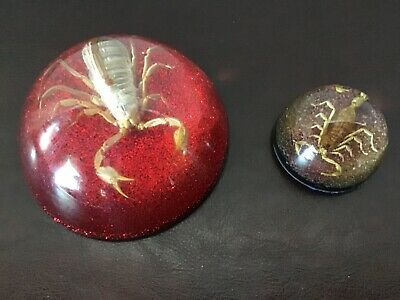 TWO Vintage MCM Large & Small Lucite/Acrylic Encased Scorpion PAPERWEIGHTS