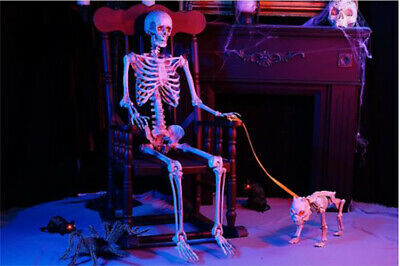 Halloween Poseable Skeleton with LED Illumination 5 ft.Life Size Decor Free Ship