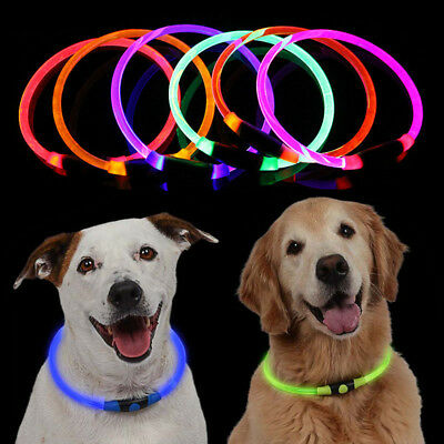 USB Rechargeable LED Pet Dog Collar Flashing Luminous Light Up Safety Glow Dark