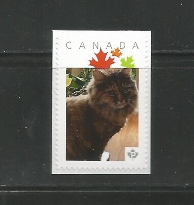 PICTURE POSTAGE   P  Maple LEAVES frame   # 2591a  PERSONALIZED    MNH * 7