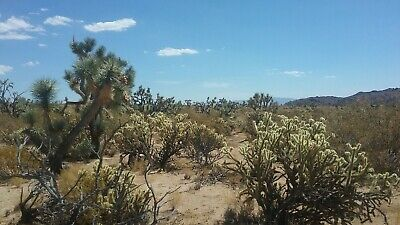 2.21 acres in Mohave county 3999 for monthly payments-Bid for down payment