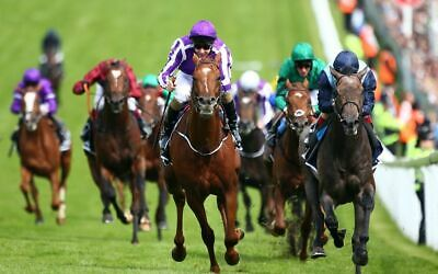 3 MONTHS SUBSCRIPTION Chase Horse Racing System 2019 100% Win Months