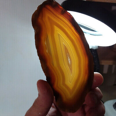 Banded Agate, slab, cabbing rough, lapidary, gemstone, brown, yellow, #R-657