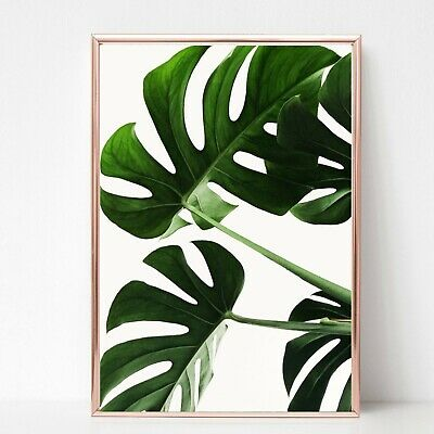 palm leafs leaves print PICTURE WALL ART A4 Botanical plant UNFRAMED 23