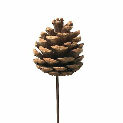 Natural Dried Christmas Pine Cone Wire Stem - Small