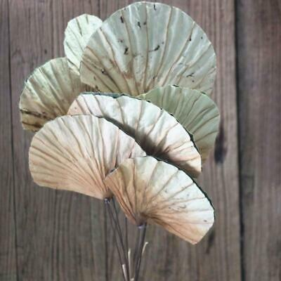 Natural Dry Lotus Fan Leaf Stem (SMALL)