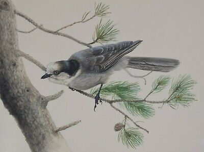 LISSA CALVERT Original Painting Whiskey Jack Grey Jay Wildlife Canadian Listed