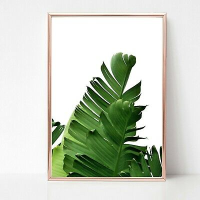 palm leafs leaves print PICTURE WALL ART A4 Botanical plant UNFRAMED 29 tropical