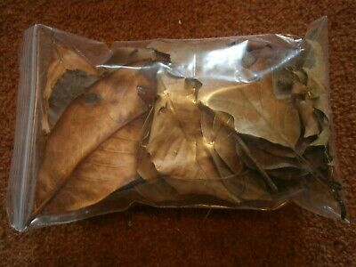 50g of Mixed Tree Leaves - Dried Leaf Litter Bio Active / Reptile / Amphibians