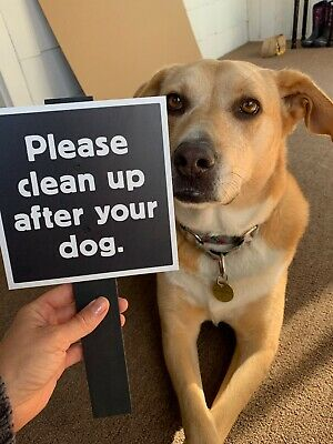 """""""Please clean up after your dog."""", 6"""" x 6"""" on Wooden Stake, for Yard Display"""