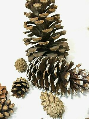 Pinecones Nature Lot of 18 Large Med Tiny Cones Holiday Pine Christmas Wreath